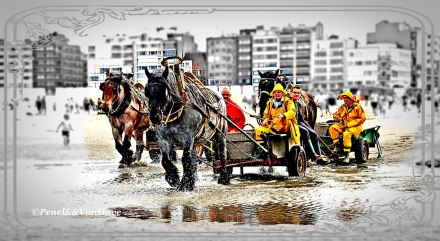 (c)-gemeente-Koksijde-garnaalvissers-te-paard-Dirk-Van-Hove-(7)